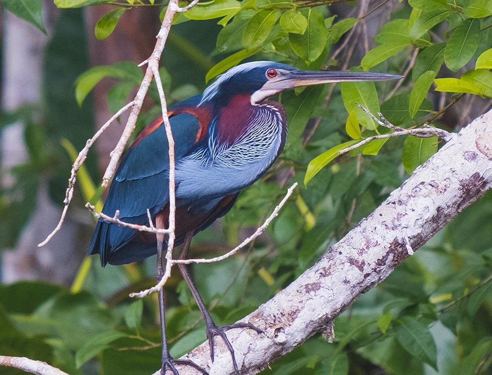 exotic amazon bird