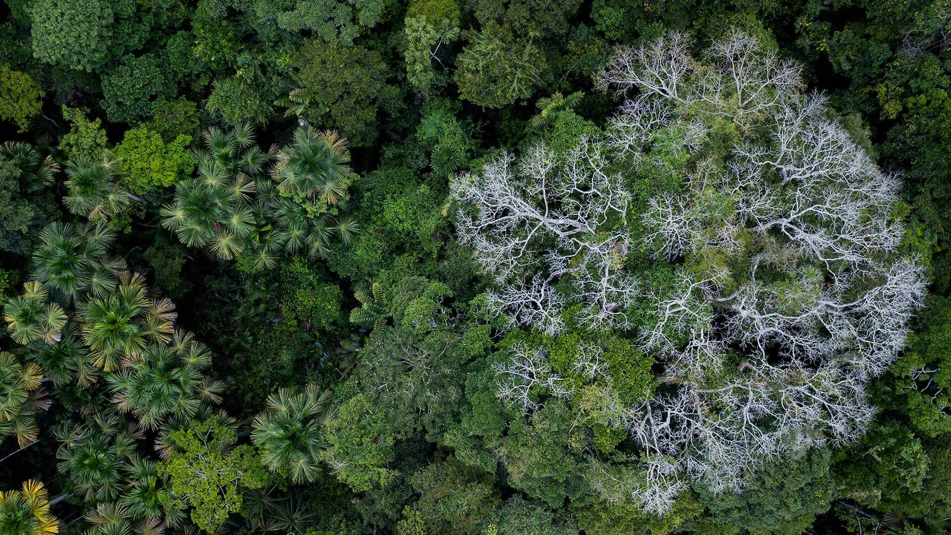 amazon trees from above