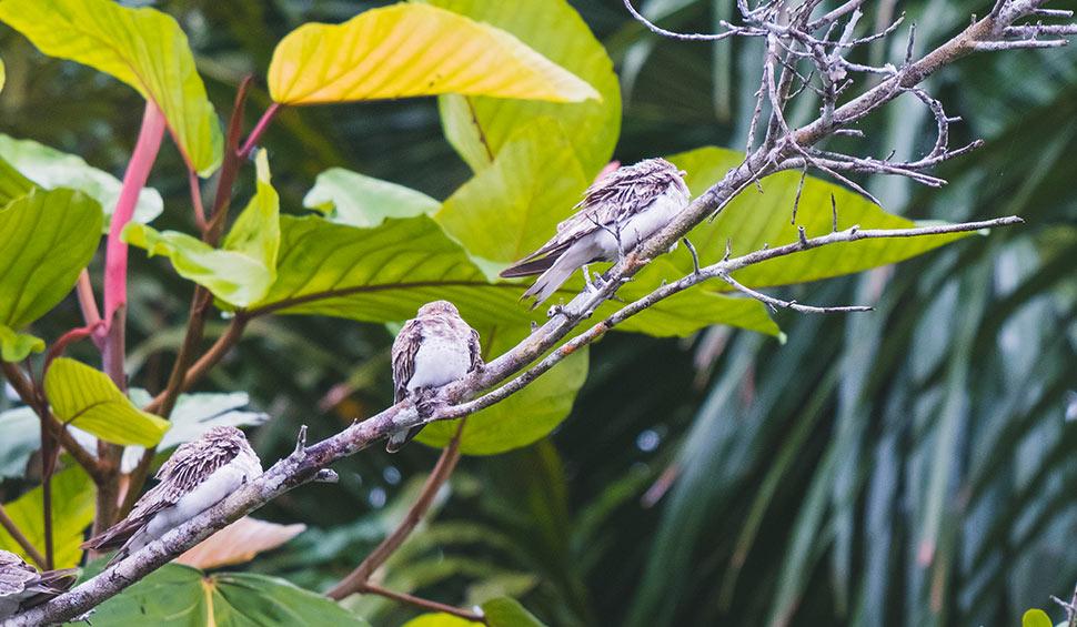birds close to la selva lodge