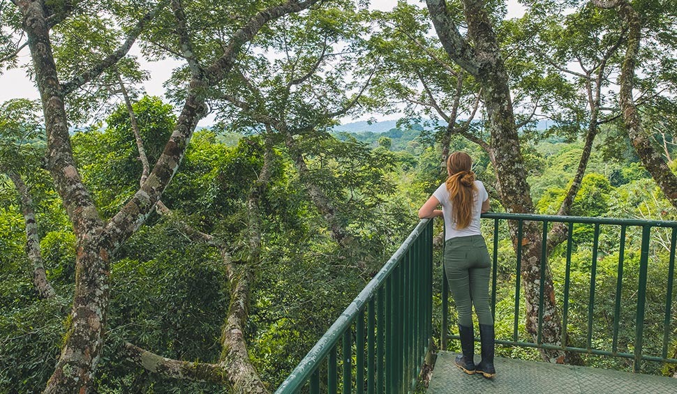 girl looking the jungle from the canopy tower at la selva