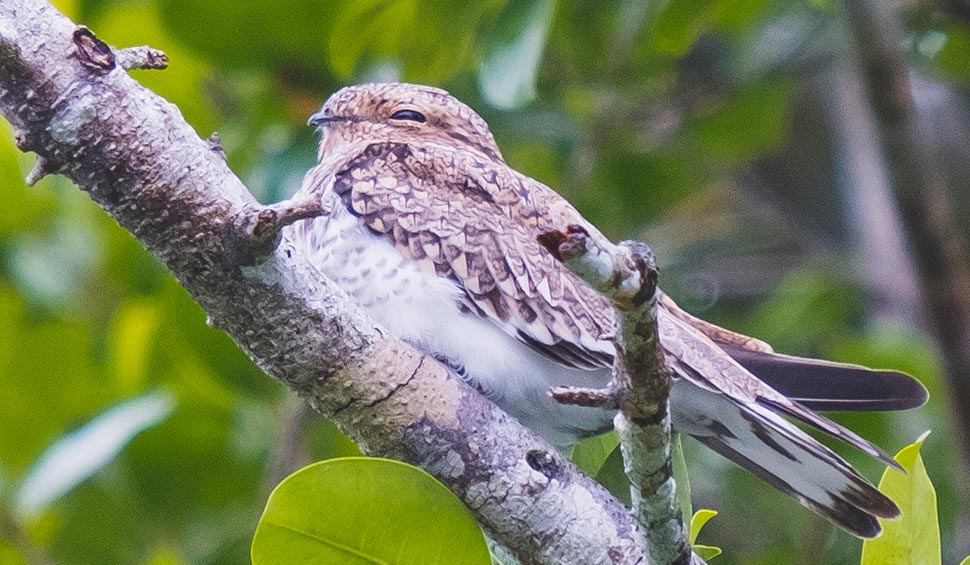 bird of the cloudforest ecuador