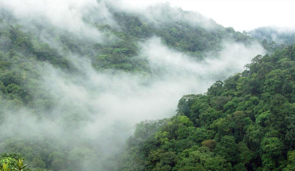 cloudforest ecuador