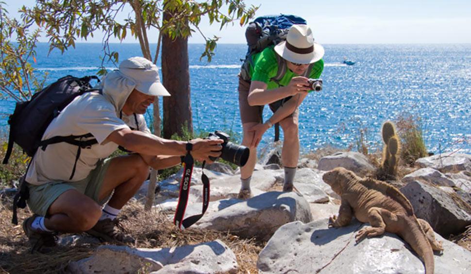 travelers taking photos of a land iguana in galapagos